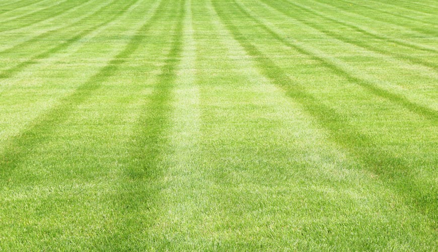Lawn Care Companies Near Me Highland Il Custom Lawn Care
