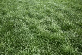 winter lawn care highland il