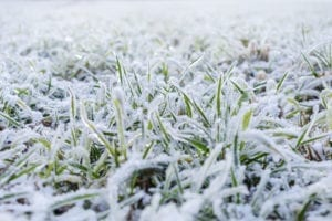 grow green grass in the winter with these lawn care tips in O'Fallon Illinois